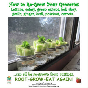 regrowgroceries.JPG
